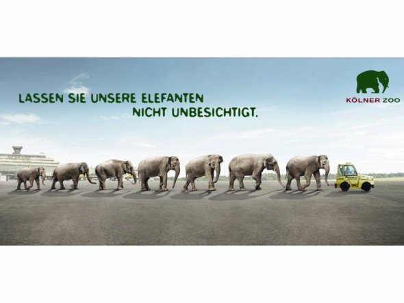 Dickhäuter auf dem Rollfeld (Foto: Zoo Köln)