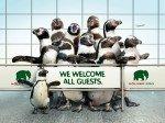 Willkommen im Winter - Pinguine am Airport CGN (Foto: Zoo Köln)