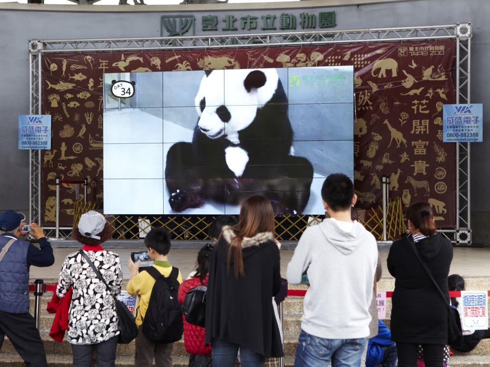 Pandamädchen Yuan Tsai auf der Video Wall im Zoo in Taipeh (Foto: VIA Technologies)