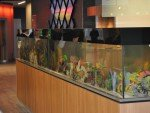 Aquarium und Art Wall (Foto: Michigan First Credit Union)