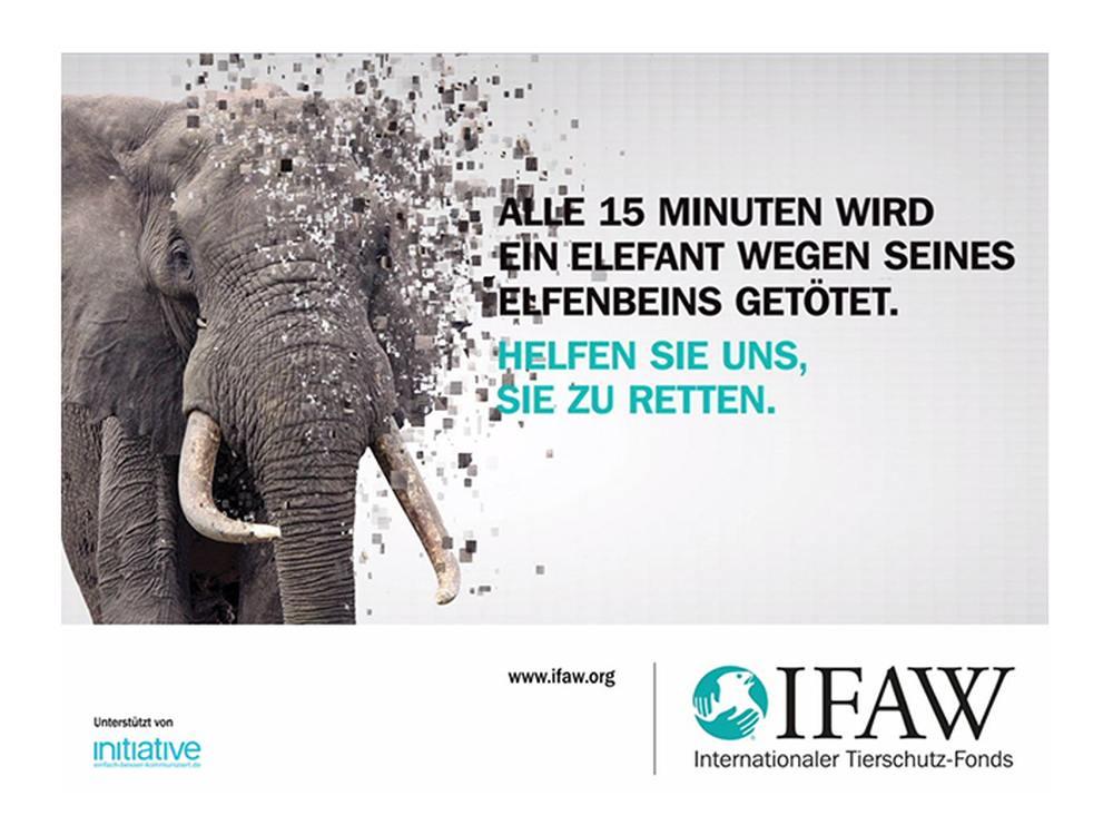So wirbt der IFAW derzeit auf DooH Medien (Foto: IFAW)