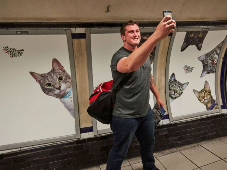 Katzen wohin das Auge blickt - Kampagne an der Clapham Common Station (Foto: Glimpse)