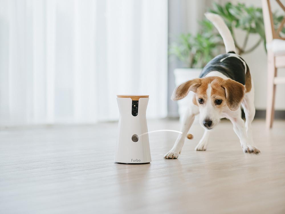 Furbo mit Beagle – oder umgekehrt (Foto: Furbo)