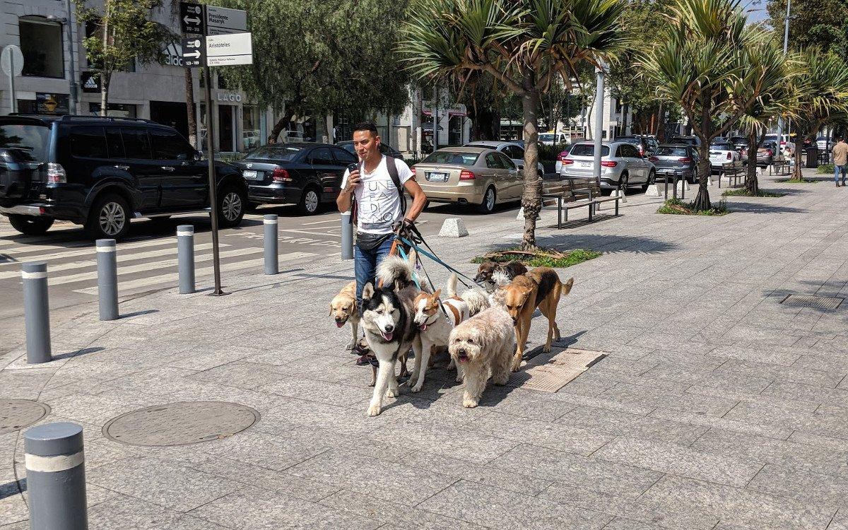 Dogsitter vor dem AT&T Flagshipstore (Foto: invidis)