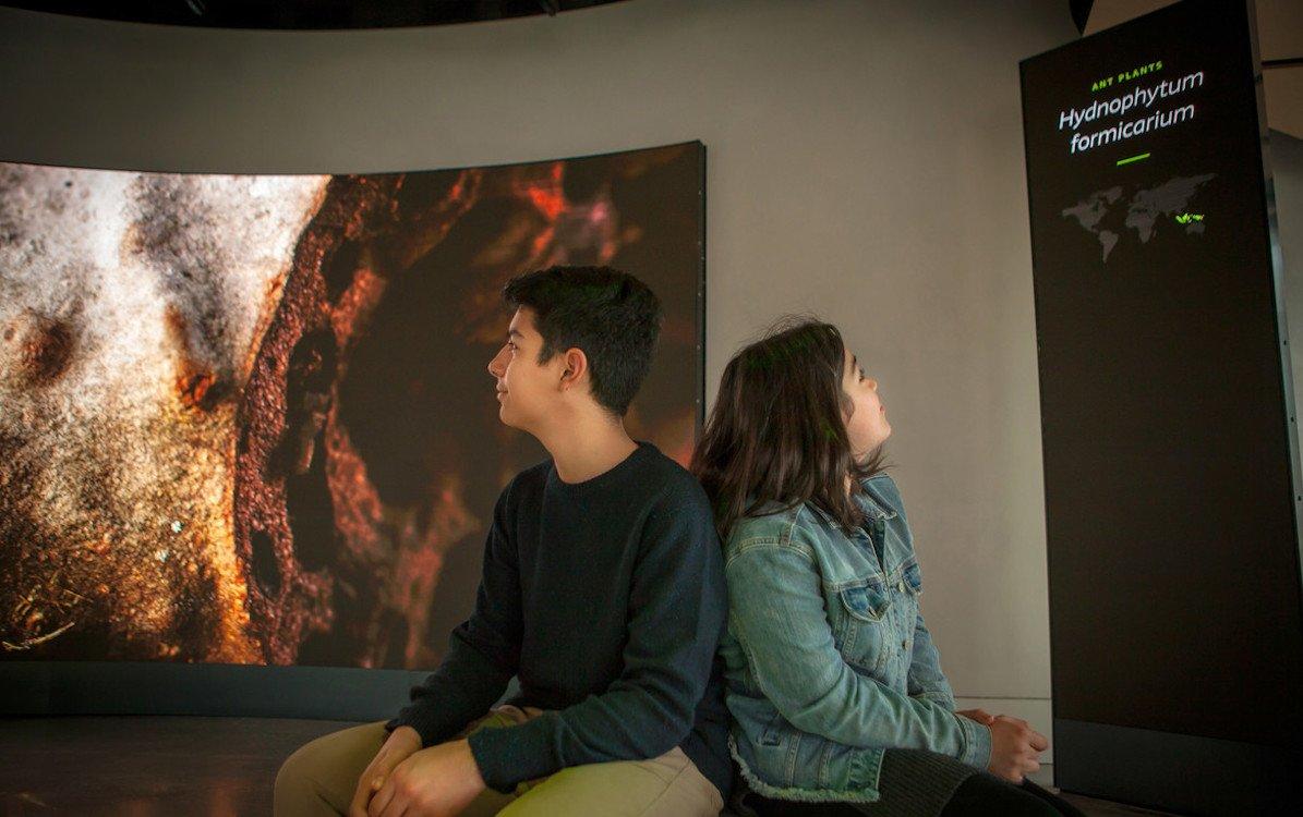 Die ausgezeichnete Installation nutzt digitale AV-Medien (Foto: Belle & Wissell)