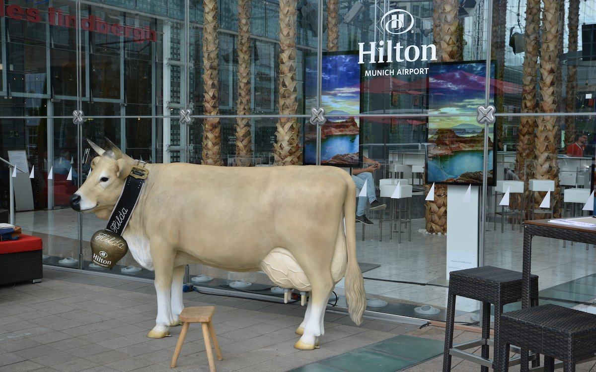 Hotelkuh Hilda, im Hintergrund High Brightness Screens (Foto: Frank Böhm)