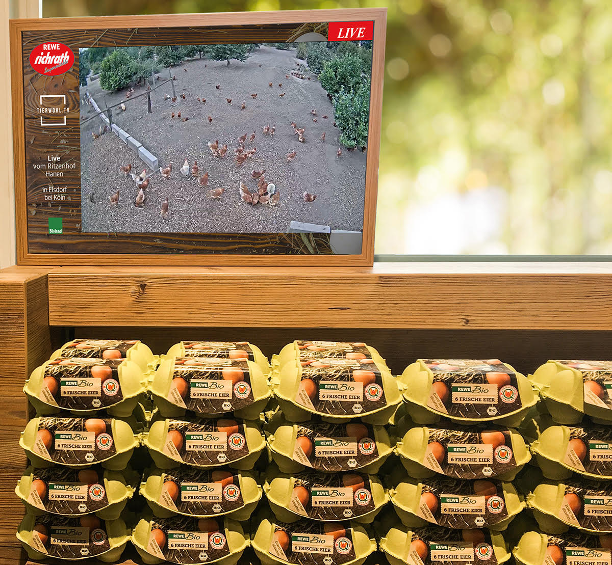 Transparenz in Bildern: Live-Aufnahmen aus dem Hühnerstall (Foto: REWE Richrath)
