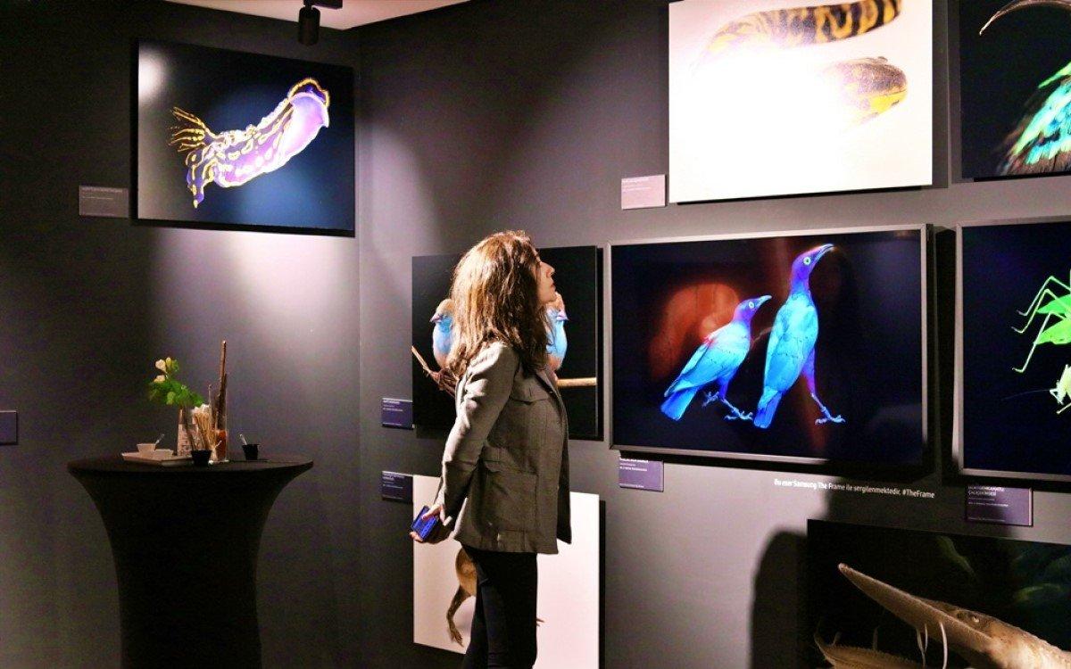 Für die Ausstellung von national Geographic unterstützt Samsung mit seinen Lifestyle-TV als digitale Bilderrahmen (Foto: Samsung)