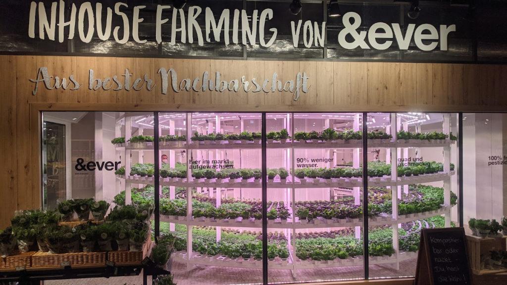 Inhouse Farming bei EDEKA Stadler+Honner (Foto: invidis)