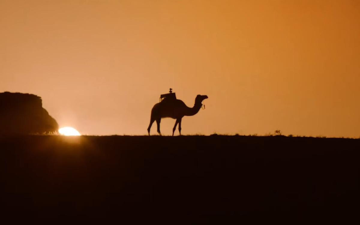 Sarha Content Creation Camel von STC (Foto: Screenshot)