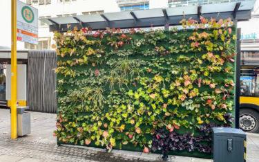 Wall begrünte in Stuttgart die Rückseite eines Fahrgastunterstands (Foto: Landeshauptstadt Stuttgart)